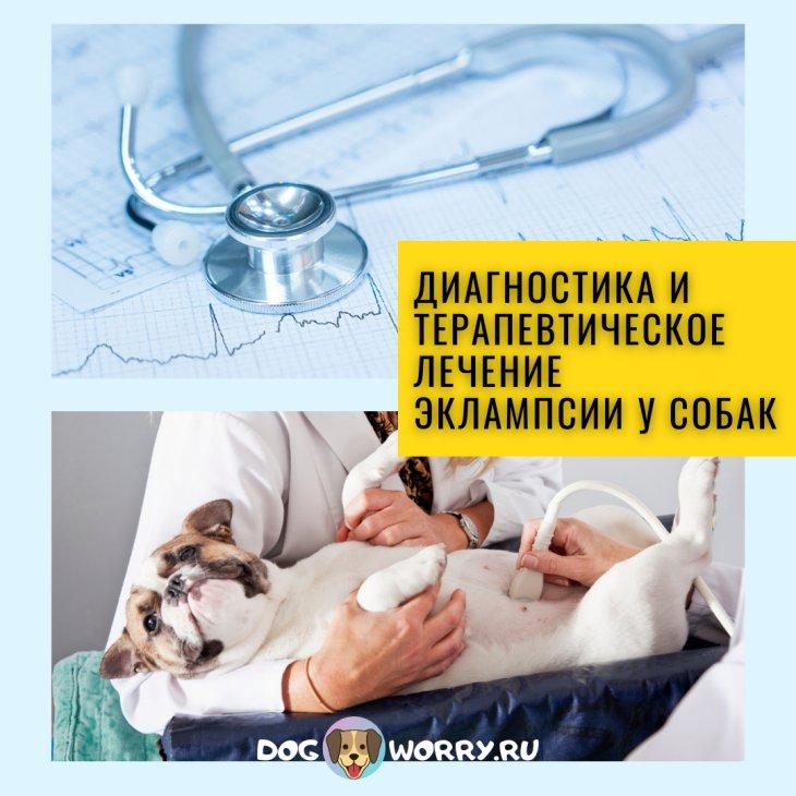 Как предотвратить эклампсию у собаки