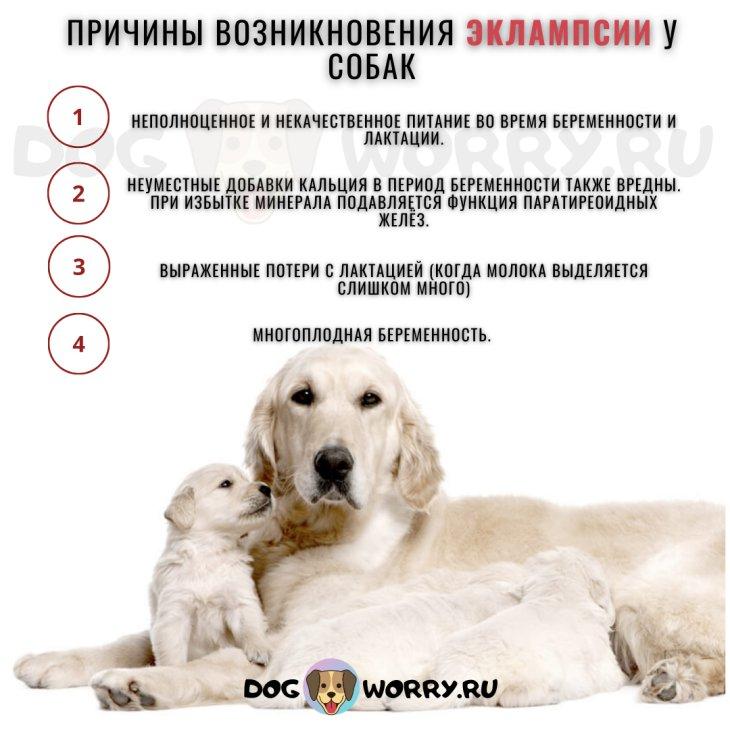 Причины возникновения эклампсии у собак