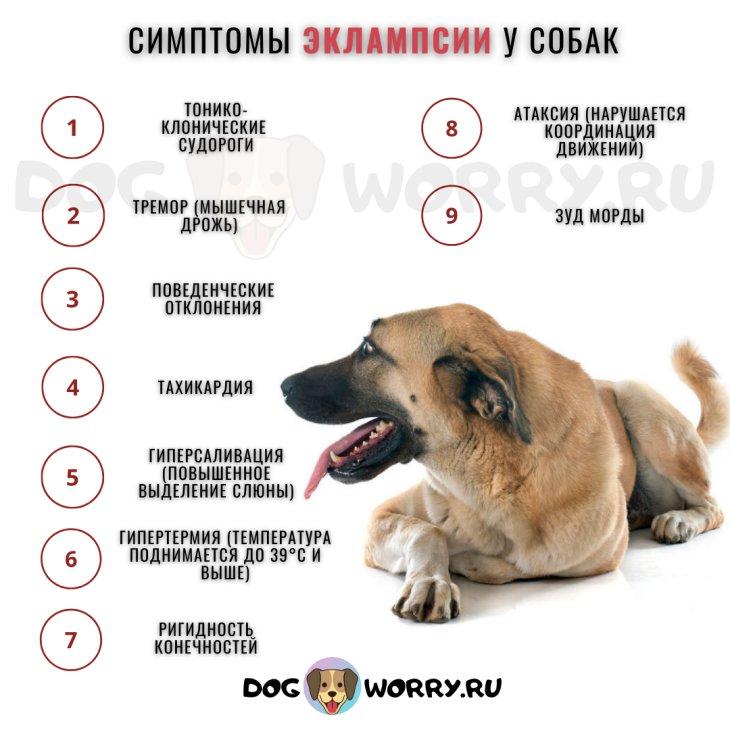 признаки эклампсии у собак после родов