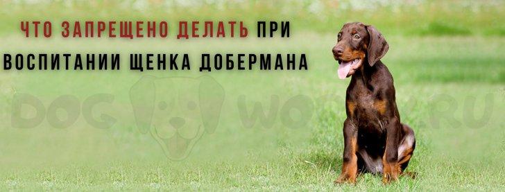Что запрещено делать при воспитании щенка добермана